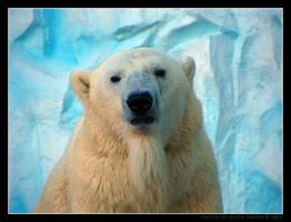 Polar Bear by Keith-Killer
