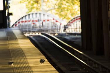 Pigeons - Gare D'Austerlistz by CharlesBrunet