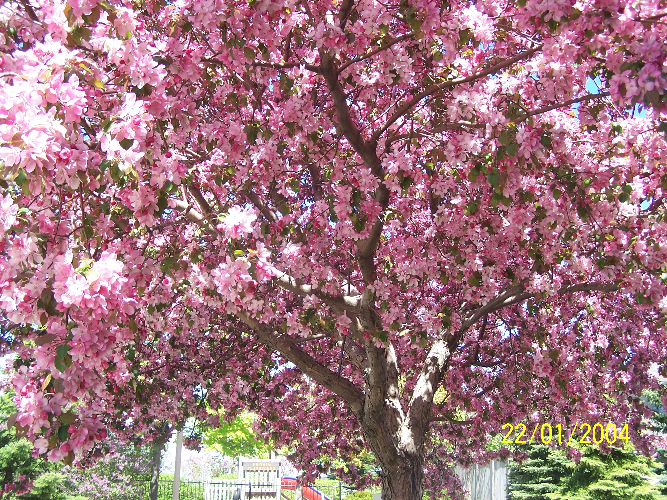 Can Anyone Tell Me What Tree This Is Yahoo Answers