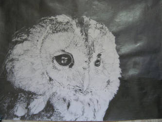 OWL :D by msartfreak101