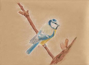 Bird at Rest by msartfreak101
