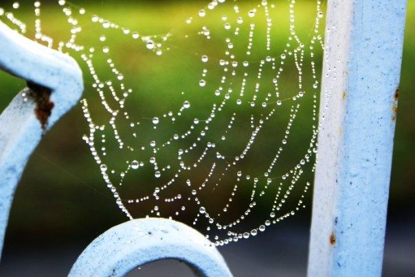 A Spider's A r t by SHlMATTA-BAKA-Nl