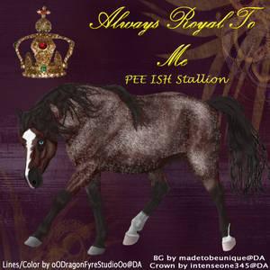 Always Royal To Me HEE ISH Stallion