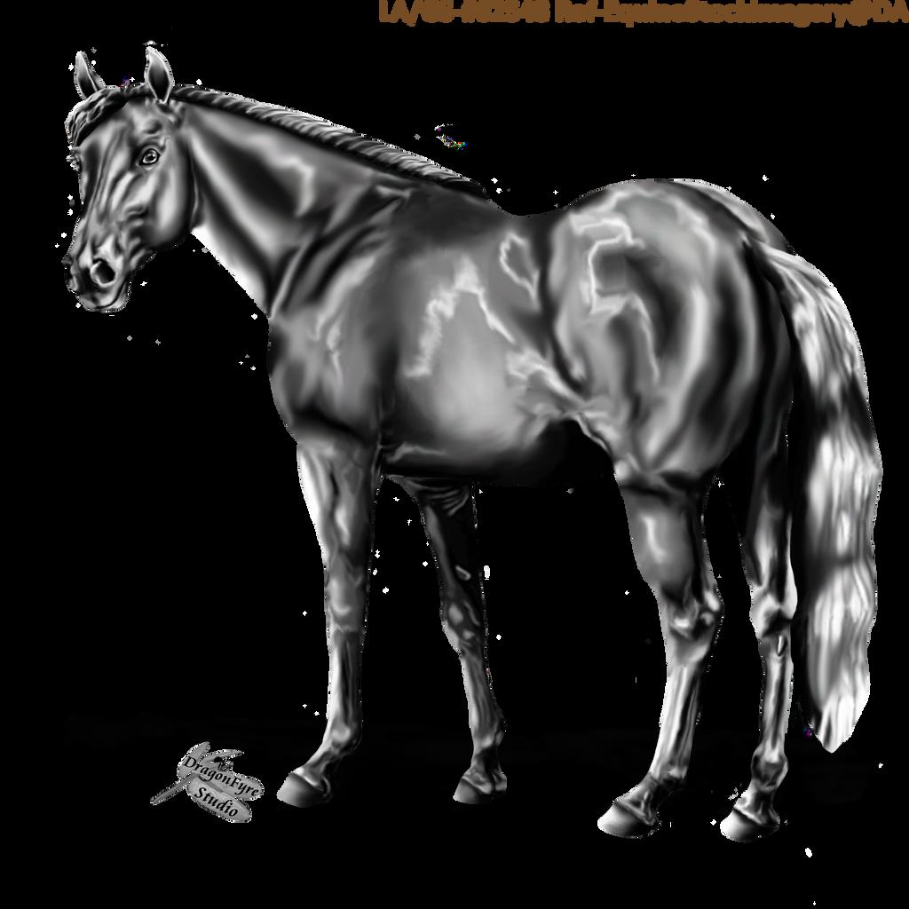 Quarter Horse Looking Back by DragonFyreStudio on DeviantArt