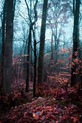 Misty Fall Evening