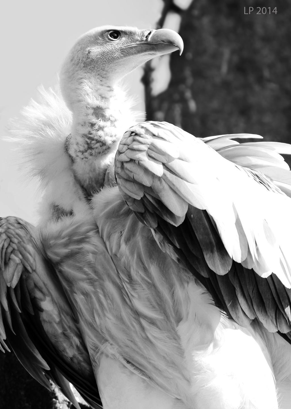 Wild Animals - Portrait III by SchwarzesHerz