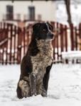 doggo in snow