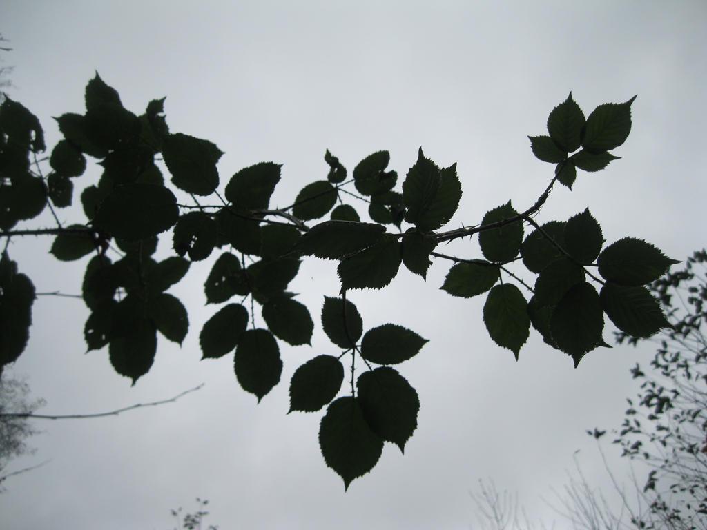 Thorn leafs by TMNT224