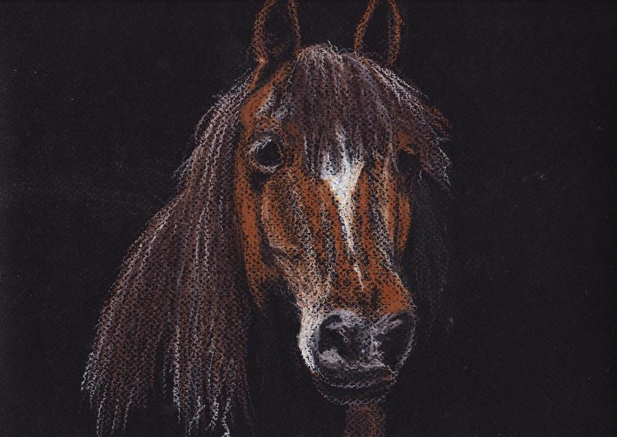 Horse by nefertiset