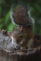 Hello Squirrel by CandiceSmithPhoto