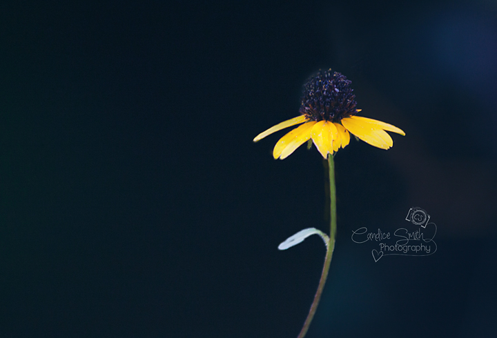 Singled Out by CandiceSmithPhoto