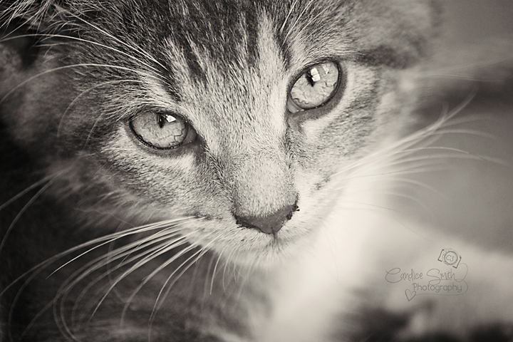 Crazy Kitty BW by CandiceSmithPhoto