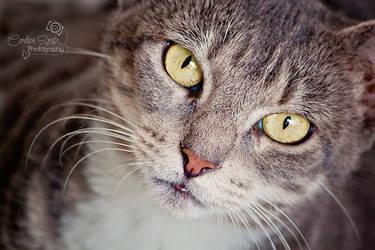 Mama Kitty by CandiceSmithPhoto