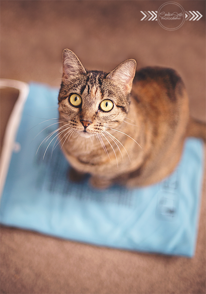 Heating Pad Stealer by CandiceSmithPhoto
