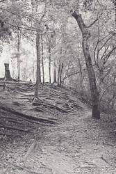 LaNana Creek Trail 3 BW