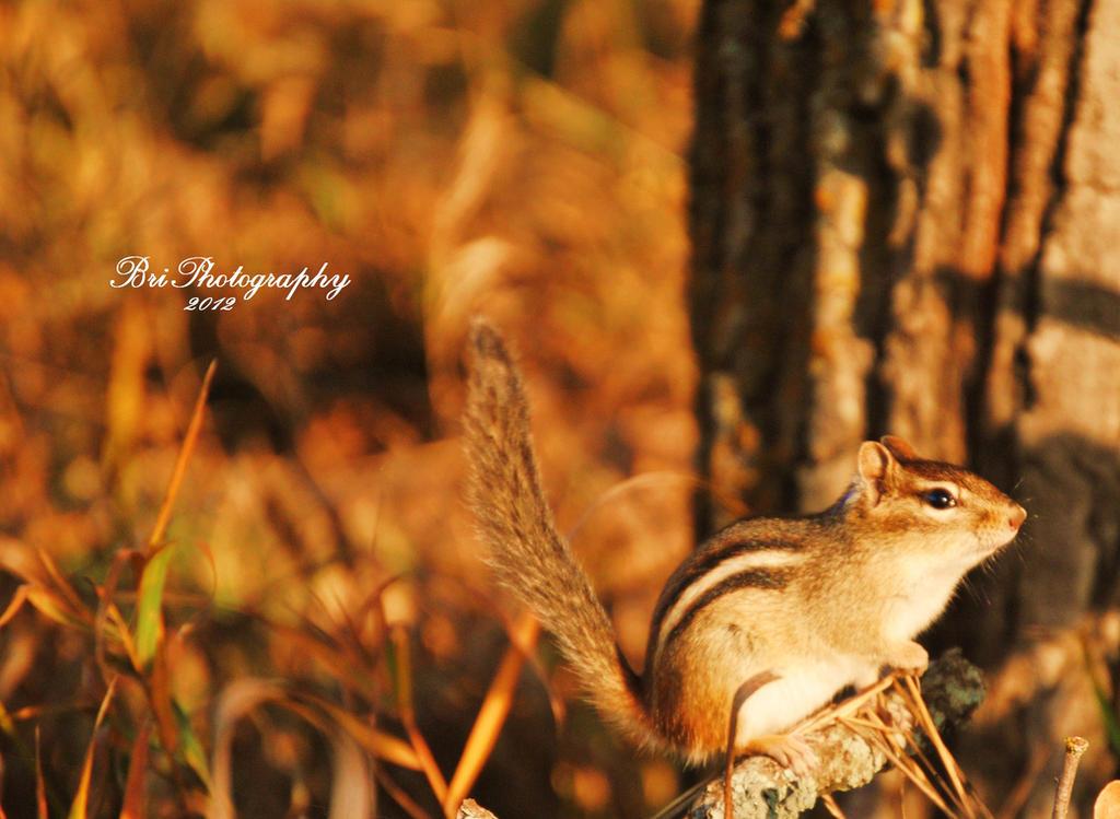Blending In by PhotographsByBri