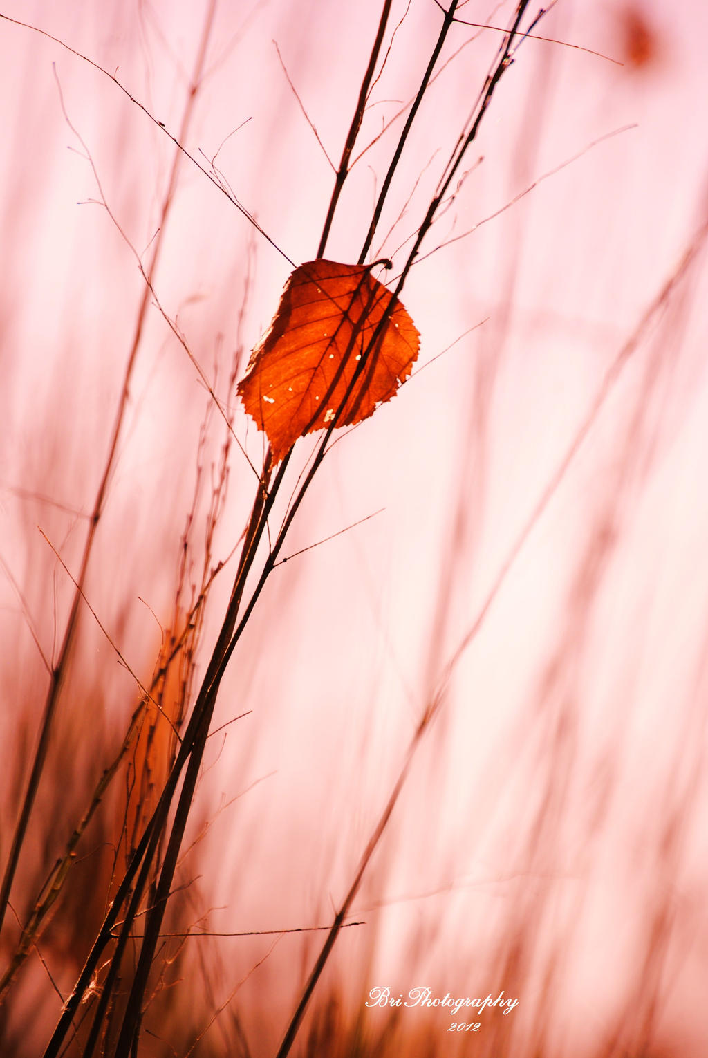 The Last of Fall by PhotographsByBri