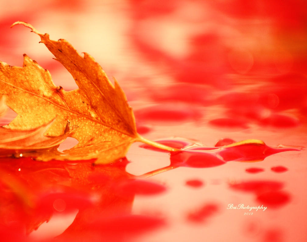 Fall in Red by PhotographsByBri