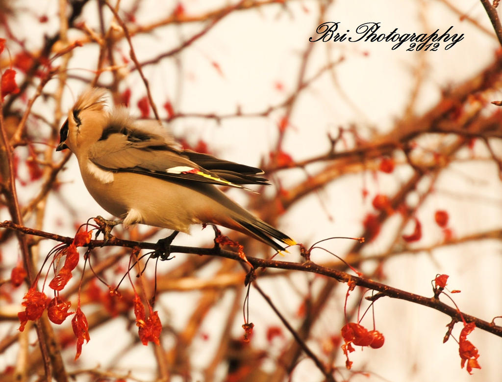 Winter Feed by PhotographsByBri