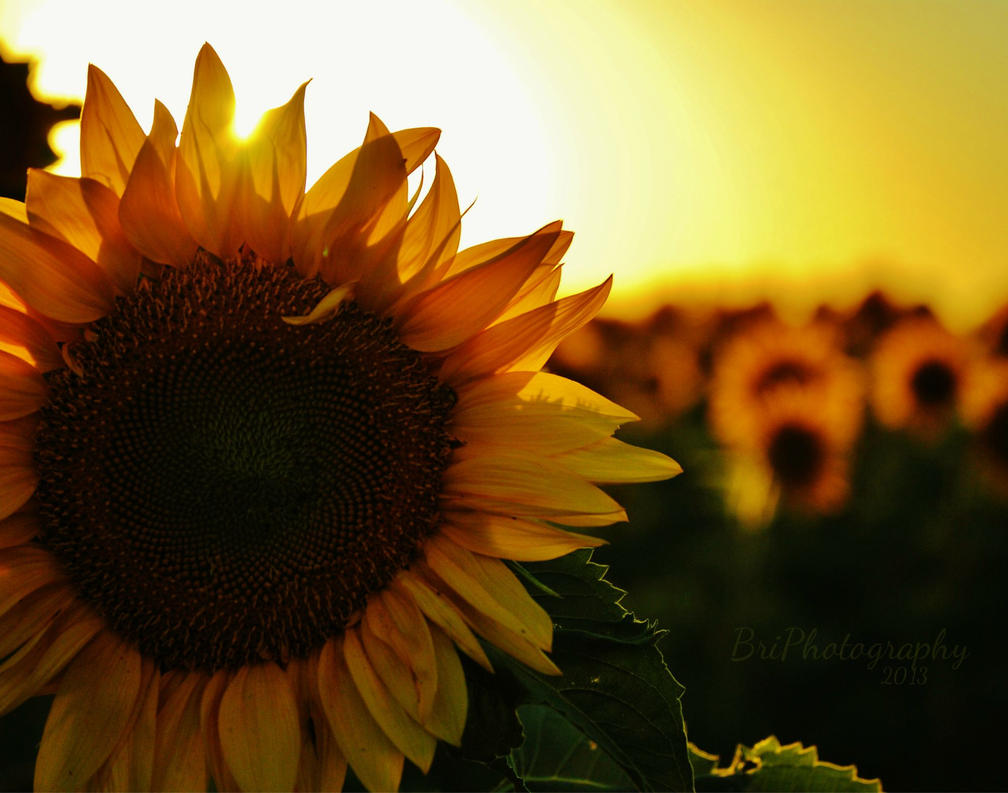 Bright Sunshiny Day by PhotographsByBri