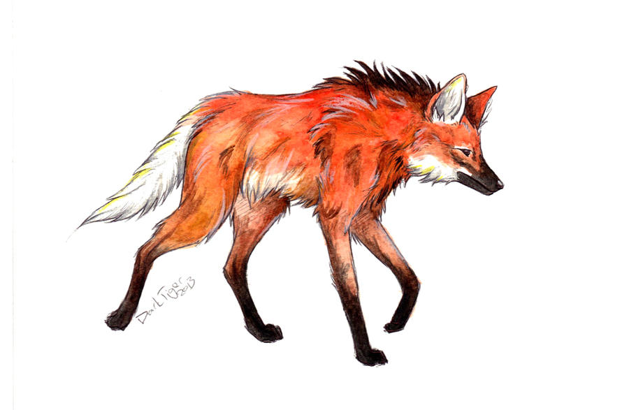 Animal Draw - Maned Wolf by DarkTiger-ex