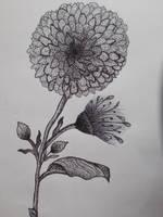 Dotwork Flower by hairosebear