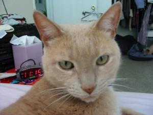 dee987's Profile Picture