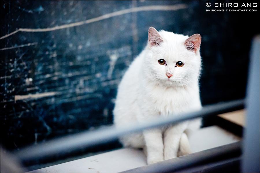 Cats - 61 by shiroang