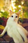 Cats - 69