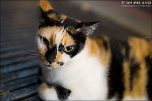 Cats - 79 by shiroang