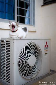 Cats - 85