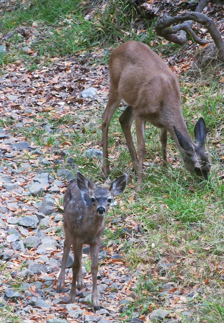 Deer 03 by xRuffian