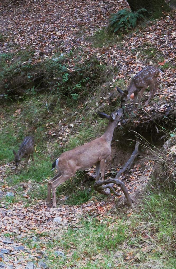 Deer 04 by xRuffian