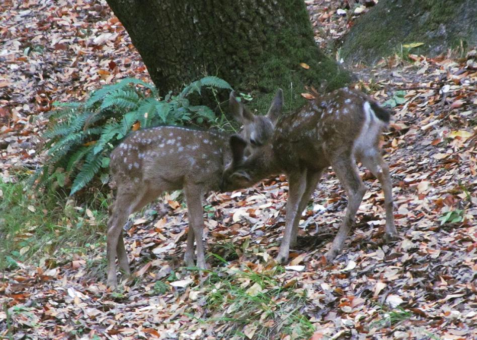 Deer 05 by xRuffian