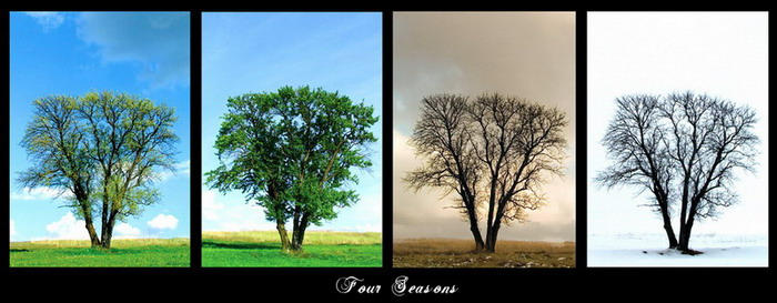 Four seasons of lonelines