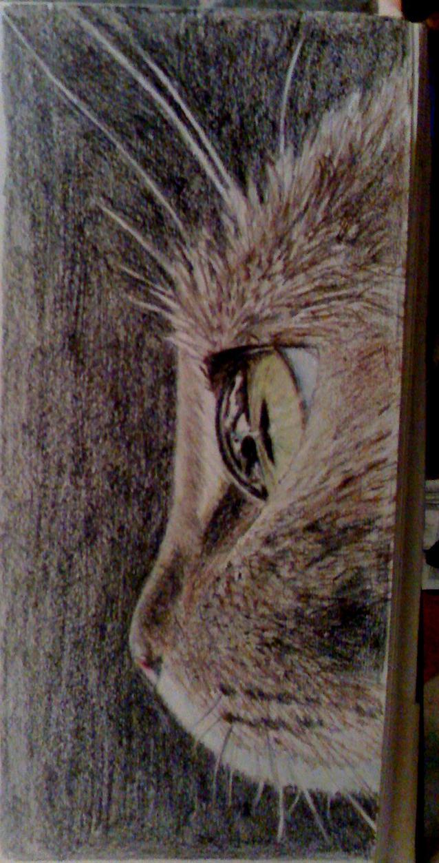 Cat's Eye by mrs-matsuyama
