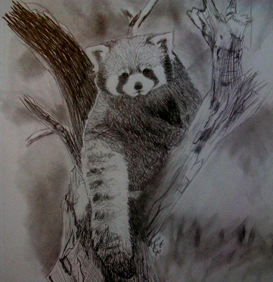 Red Panda Drawing Red panda sketch by mrs-Red Panda Drawing Furry
