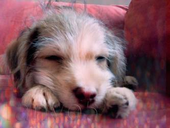 Sleep by fany05