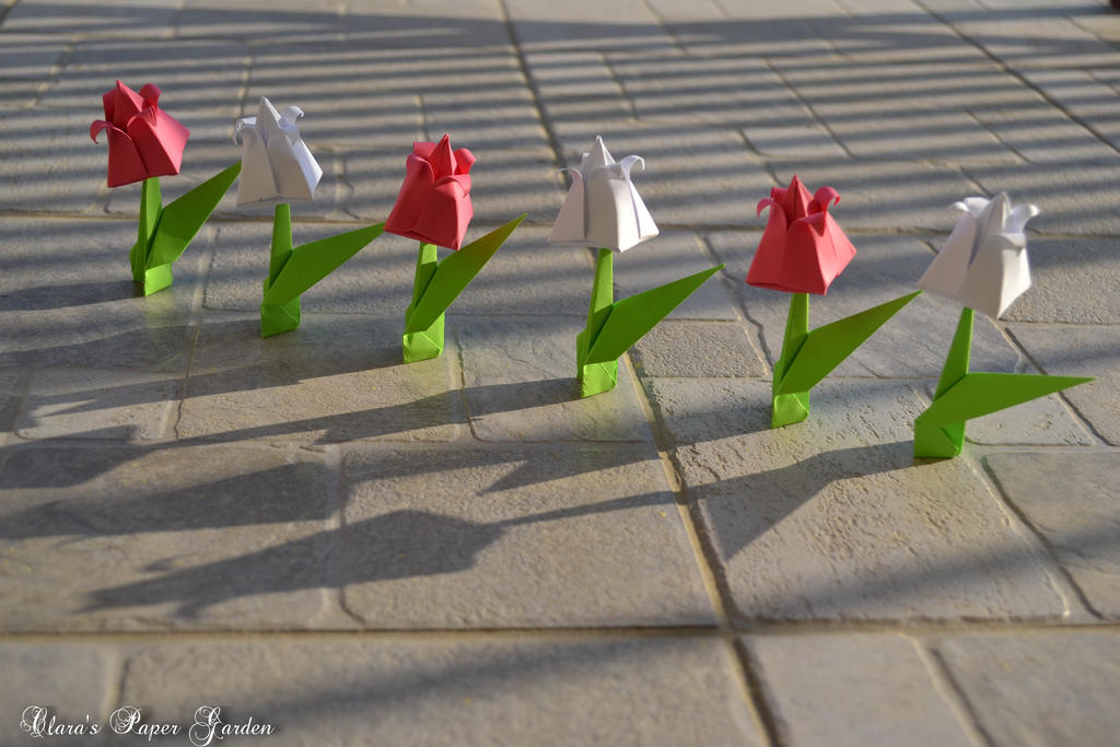 Tulips by cridiana