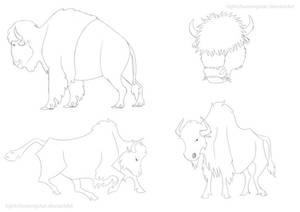 Bison Sketches
