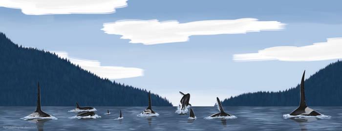 Killer Whales - Concept Art