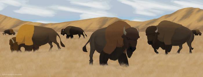 Bison Herd - Concept Art