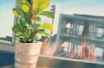 aken ja taim