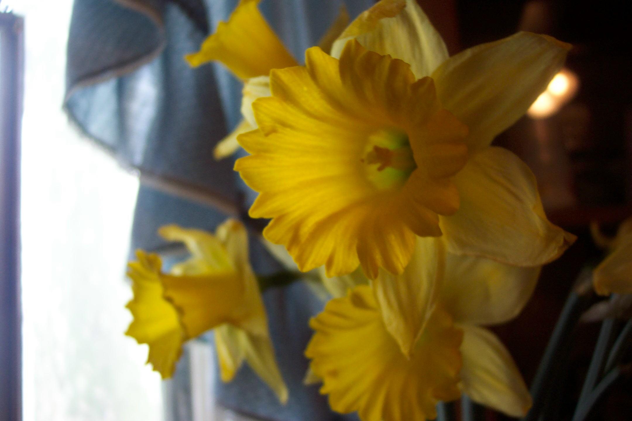 Cellophane Flowers By Moodymona On Deviantart