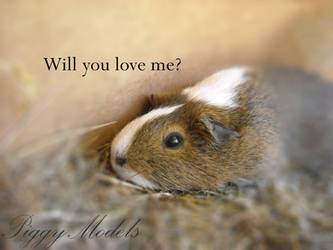 Will you love me? by PiggyModels
