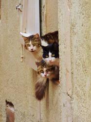 Gossip Cats by El-Amigo-Chico
