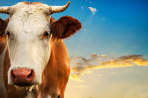Good morning cow by Threepwoody
