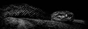 Rattlesnake by Threepwoody