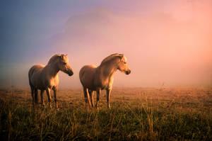 We are horses! by Threepwoody