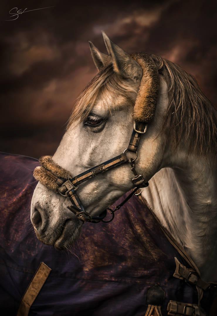 Horse Portrait by Threepwoody